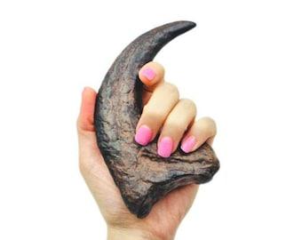 Raptor Claw Fossil Replica | Jurassic Period | Dinosaur Party | Dinosaur Decor