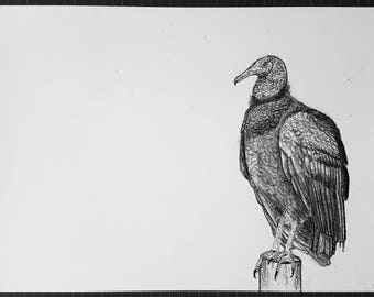 Black Vulture Charcoal Drawing