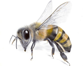 Bee Study, limited edition print