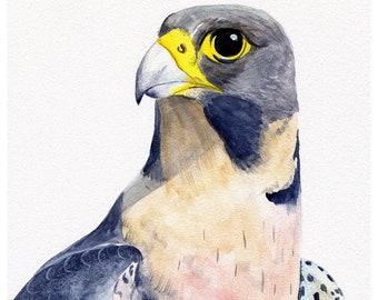 Peregrine falcon art, watercolour peregrine, falcon art print, watercolor art print, gift for bird nerd, adventure awaits, spirit animal art