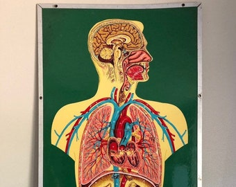 Mutter Museum Medical Anatomy Chart Skull Illustration 8x10 Canvas Art Print New