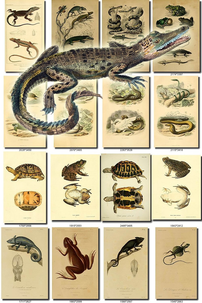 8400 VINTAGE REPTILES Jpegs images Pack from ArtsCult com with great  DISCOUNT ArtsCult shop wholesale pictures public domain royalty-free
