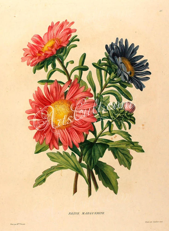 Flowers 32408 bellis daisy aster red blue nice flowers etsy zoom izmirmasajfo