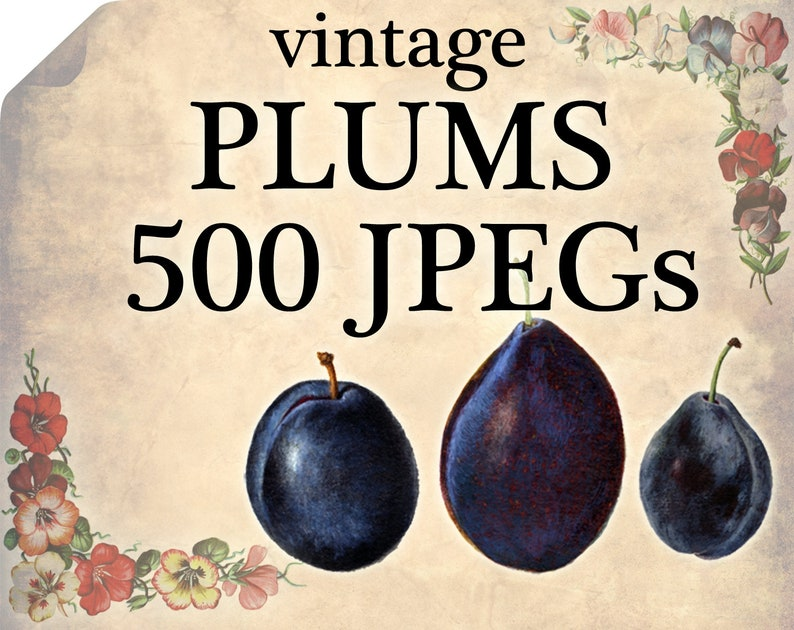 500 VINTAGE PLUMS Jpegs images Pack from ArtsCult com with great DISCOUNT  ArtsCult shop wholesale pictures public domain royalty-free berry