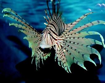SALT WATER LION FISH HOME DECOR CERAMIC KITCHEN  KNOB DRAWER CABINET PULL