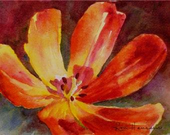 Orange Tulip Closeup, 5x7 Small ORIGINAL Watercolor