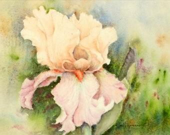 7x10 Original Watercolor, Pink and Peach Iris