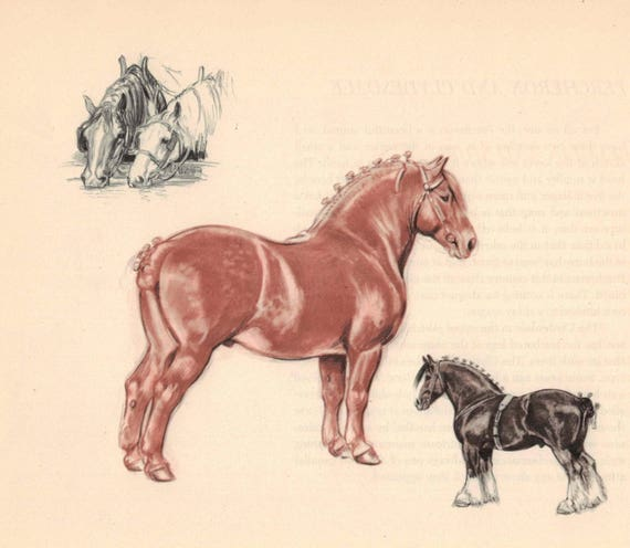 Shire Draft Horse Color Print by Edwin Megargee Book Plate | Etsy