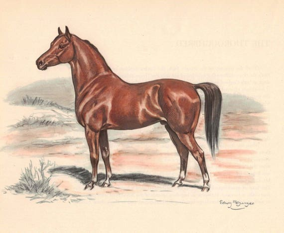 Arabian Horse Color Print by Edwin Megargee Book Plate | Etsy