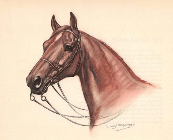 Portrait of a Brown Saddle Horse Color Print by Edwin Megargee | Etsy