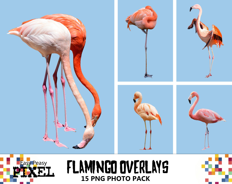 FLAMINGOS OVERLAYS shop Overlays Vögel Overlays