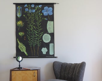 Vintage school chart of FLAX or LINSEED by Jung Koch Quentell. Pull down botanical chart 1961-1963