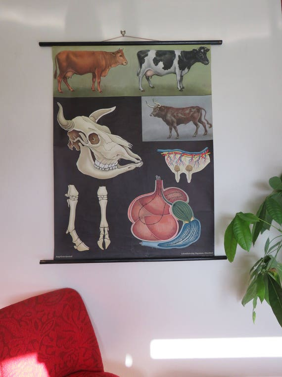 Jahrgang Rolle unten schulkarte Rinder von Jung Koch Quentell | Etsy