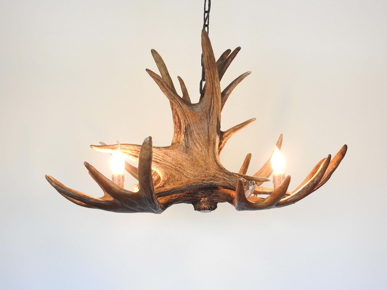 Real Moose Antler Chandelier for 3 Lights