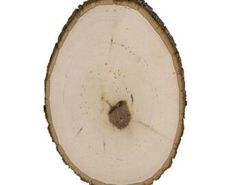 The wood log slice