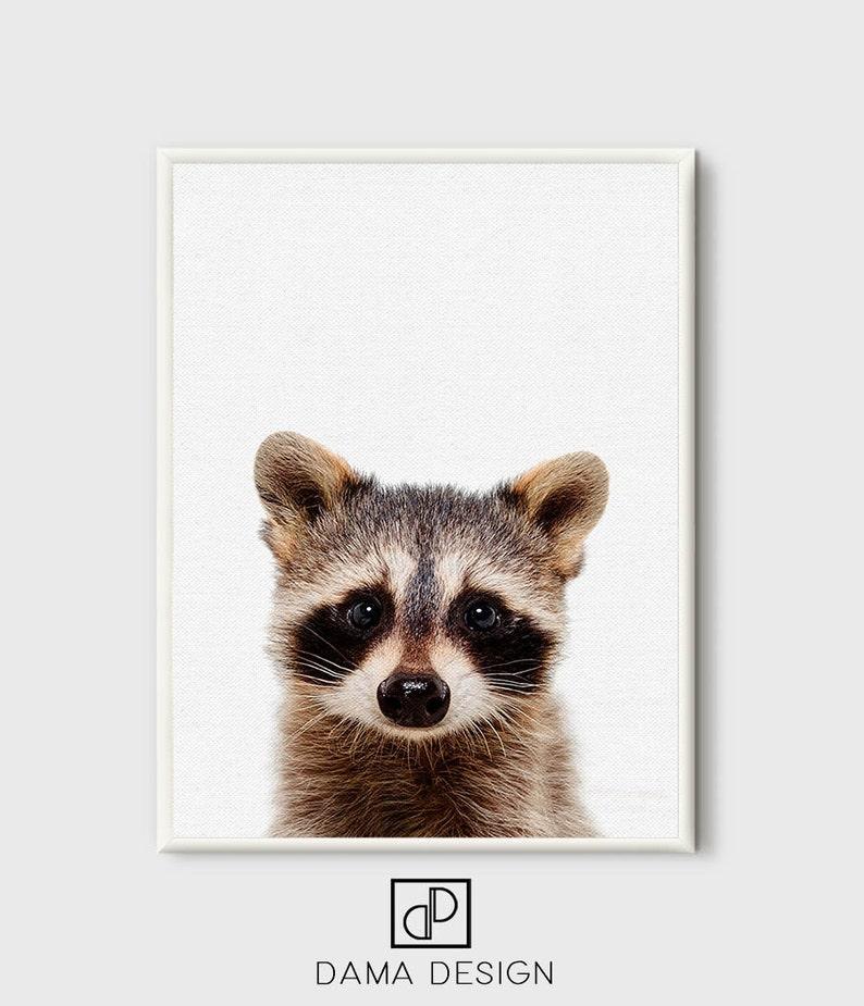Raccoon Print Raccon Art Woodlands Art Raccoon Printable image 0