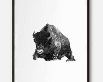 Bison, Buffalo, Buffalo Art, Bison Art, Black and white photo, Animal Photography, Animal Wall Art, Winter Art, Animal in winter, Wildlife