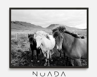 Horse Photography, black and white Photo, Horses wall art, horse poster, horse prints, equine photography, Horses Wall Art, Horse Picture