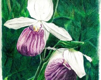 Lady Slipper Orchid Print/Lady Slipper Orchid Prismacolor Drawing Print/Floral Wall Art/Interior Design Ideas/Wall Art that Pops!