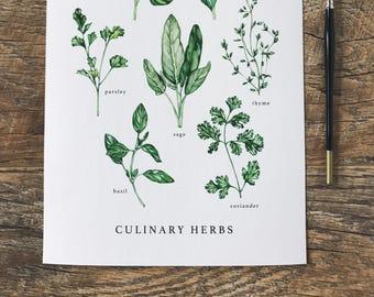 Culinary Herbs A4 Print