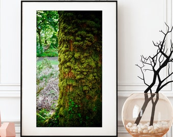 Moss Covered Tree Print / Ireland Nature Photography / Enchanted Forest Wall Art / Home Decor / Natural Art / Forest Print / Tree Wall Art
