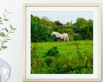 Square Irish Horse Print / Kinsealy Ireland Photographic Print / Ireland Travel Photography / Animal Wall Art / Nature Home Decor