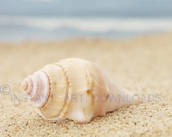 Seashell Photography, Seashell Wall Art, Seashells, Ocean, Beach, Printable Art, Sand, Digital Downloads, Beige Blue Nature, Ocean Photos
