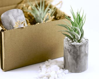 Air Plant & Holder Gift Set // Tillandsia Scaposa with Marble Effect Concrete Pot // Hello Tilly AirPlant
