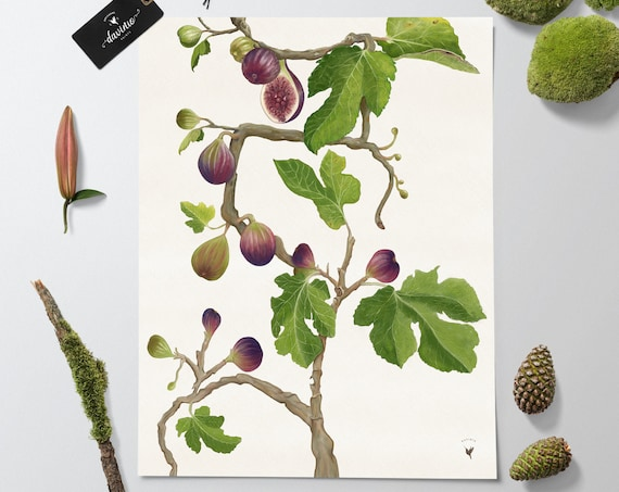 HANDMADE Fig Tree Giclée Art Print | Fig Tree Painting | Fig leaves and Fruit. Fiddle Leaf Tree wall art, Purple Fig & ripening green fig