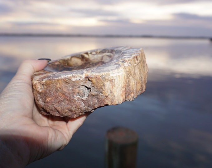 Polished PETRIFIED WOOD Bowl or Ash Tray - 3.5 lbs 160x145x37mm - This Healing Crystal can Stabilize and Ground you b146