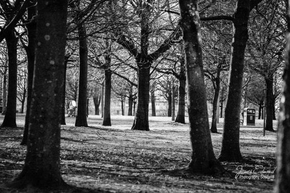 Glasgow, Glasgow Photography, Nature Photography, Black and White, Scotland, Scottish, Wall Art, Wall Decor, City Photography, Park, Trees