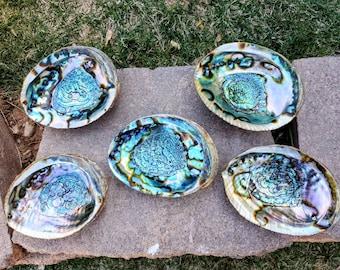 Iridescent Dish BIG Abalone Shell Bowl Tiki Real Shell 1960 Art Piece
