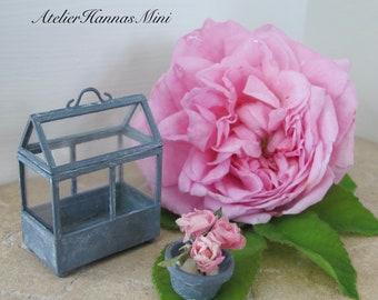 NEW: Mini mini green house to open.