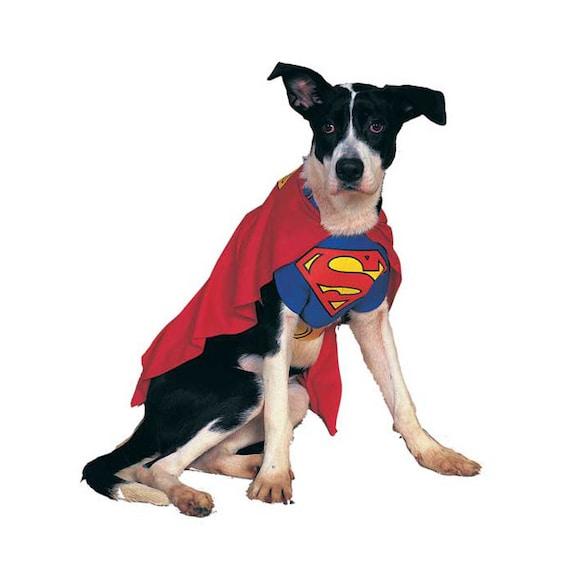 Dog wearing superman cape costume.
