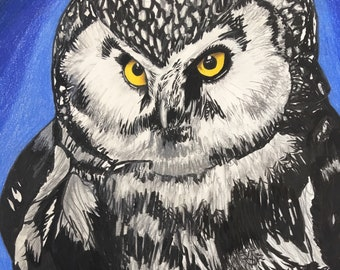 Midnight Owl. Original piece. Matted colored pencil drawing