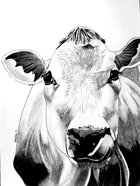 Cow Jersey Cow Black And White Cow Blank Greeting Card Of Etsy