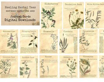 Botanical Herb Medicinal Plants Elder Flower 212 Vintage Art Print//Poster