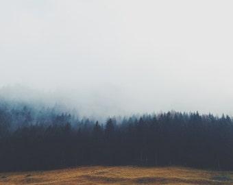 Fog Forest - Forest Photo - Forest Digital Print - Misty - Square - Digital Photo - Digital Download - Instant Download - Last Minute Gift
