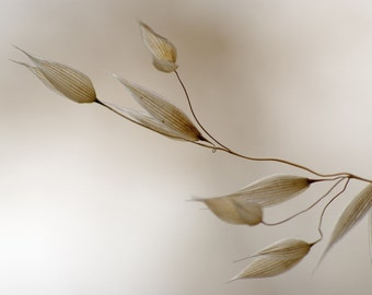 Minimalist Photo - Dry Plant Photo - Botanical Sepia Photo - Sepia - Digital Photo - Digital Download - Living Room Decor - Last Minute Gift