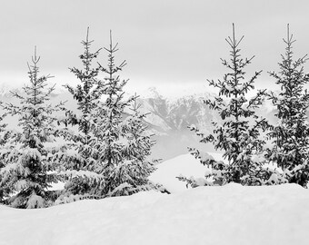 Winter Forest Photo - Winter Printable - Winter Landscape Print - Forest Landscape - Digital Photo - Digital Download - Instant Download