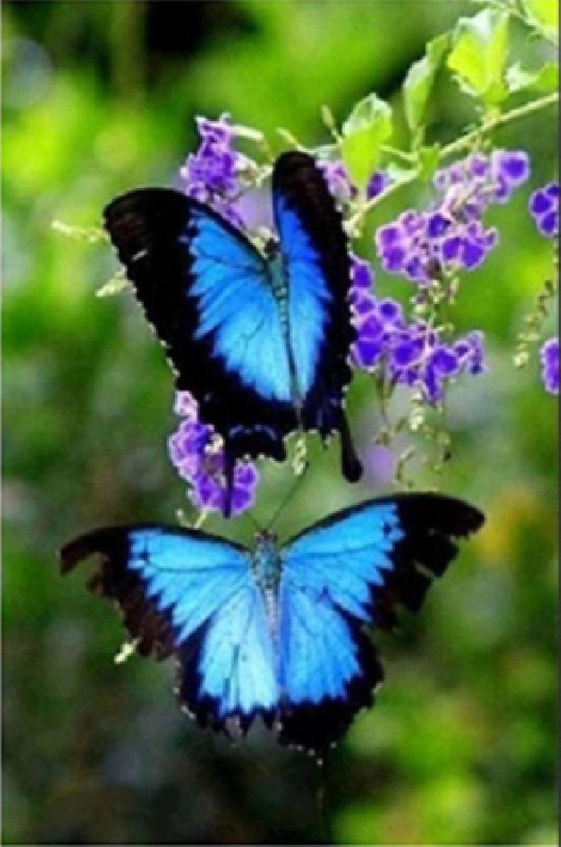25x15cm diamond painting kits Butterfly 3