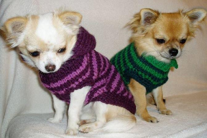 Pullover Chihuahua Kleidung Haustier Kleidung Kleiner Etsy