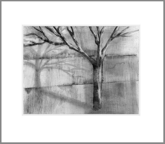 Tree shadow 3, charcoal drawing, black and white
