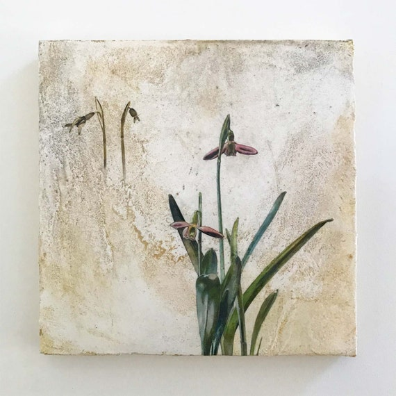 Snowdrop, mixed media botanical art for the home