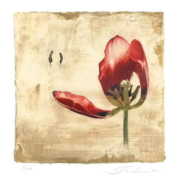 Red Tulip Opening, botanical print, mother's day, flower print, affordable art, venetian plaster, wall decor, limited edition, miniature