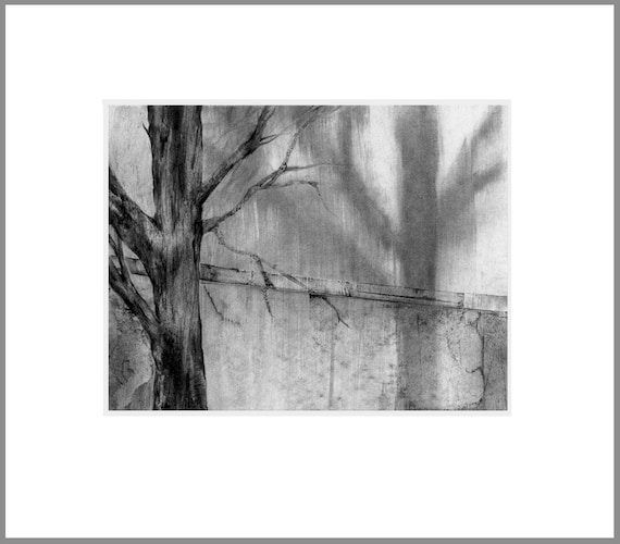 Tree shadow 2, charcoal drawing, black and white