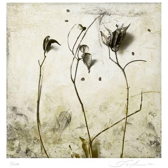 Milkweed Botanical Print, limited edtion archival pigment print