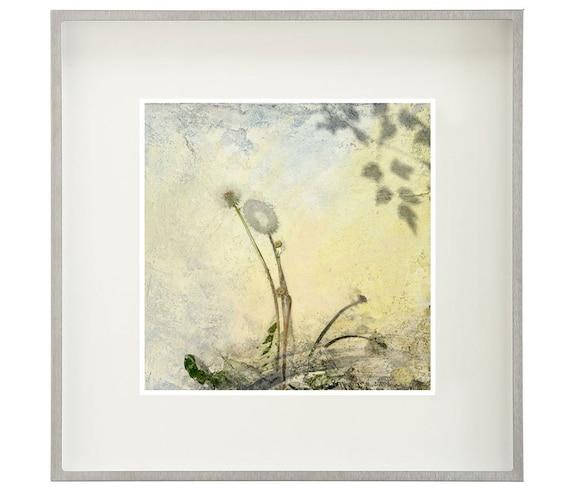 Dandelion, limited edition archival pigment print