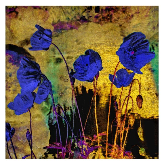Blue Poppies for Redon, limited edition fine art print