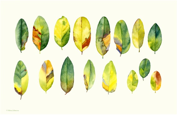 Botanical Watercolor Print, leaves, specimen study, watercolor art